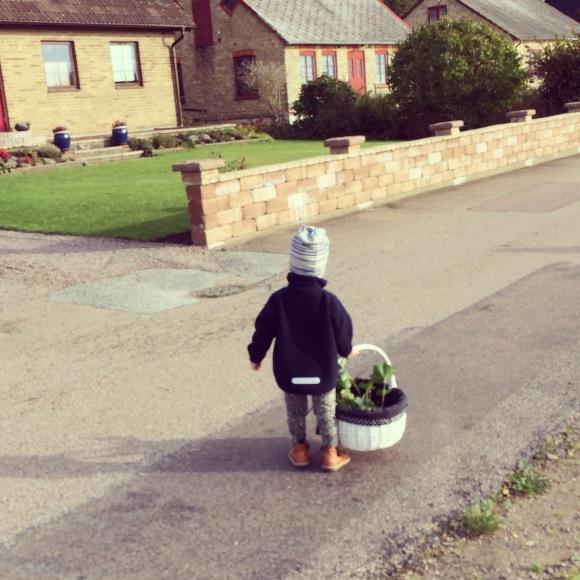 Lilly plockar löv med mormor