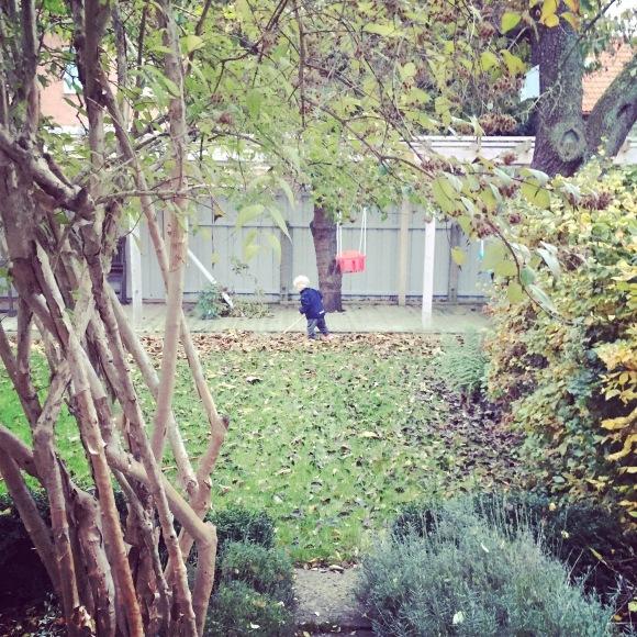 Lilly städar trädgården