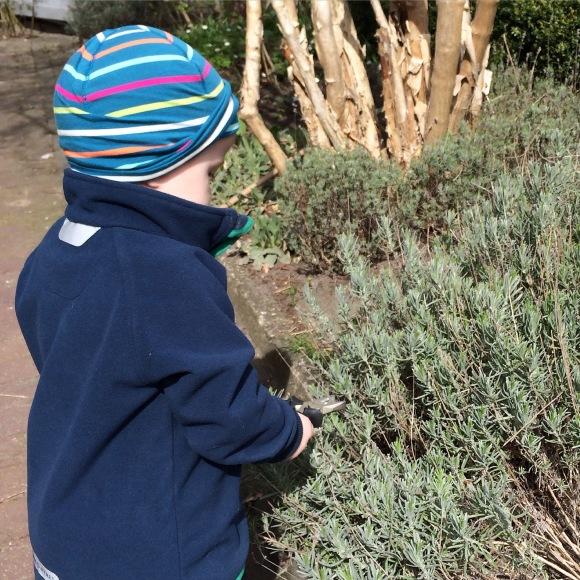 Hugo klipper buskarna