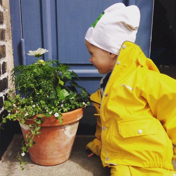 Lilly doftar på blommorna