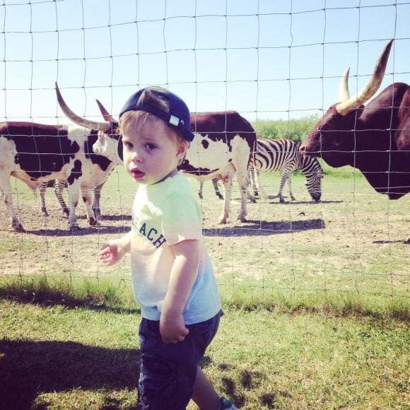 Hugo på Ystad djurpark