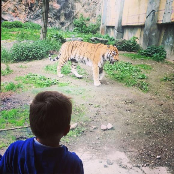 Oskar och tigrarna